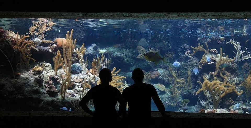 Aquarium Beleuchtung Welche Lichtfarbe | Argumente Fur Die Gluhhbirne Informationen Uber Gluhbirnen